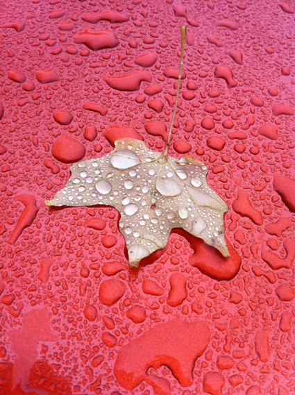Leaf on our car in the rain